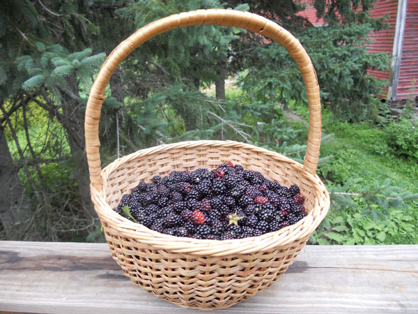 Basket_of_wild_blackberries